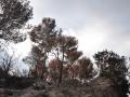urlaub-mallorca-2013-nr-117