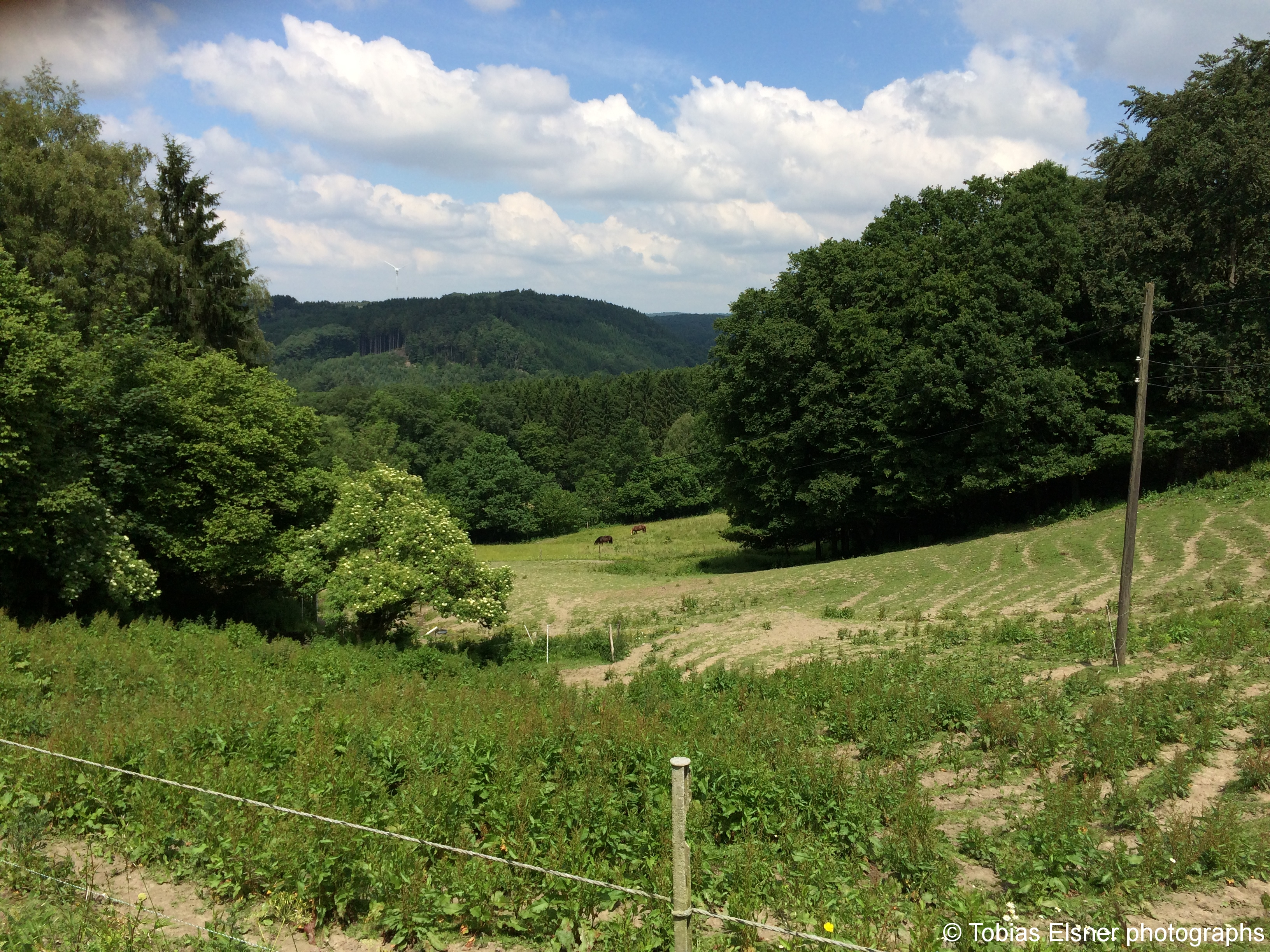 Wanderung Wald Wasser Wolle Weg Radevormwald 2014 Nr.46