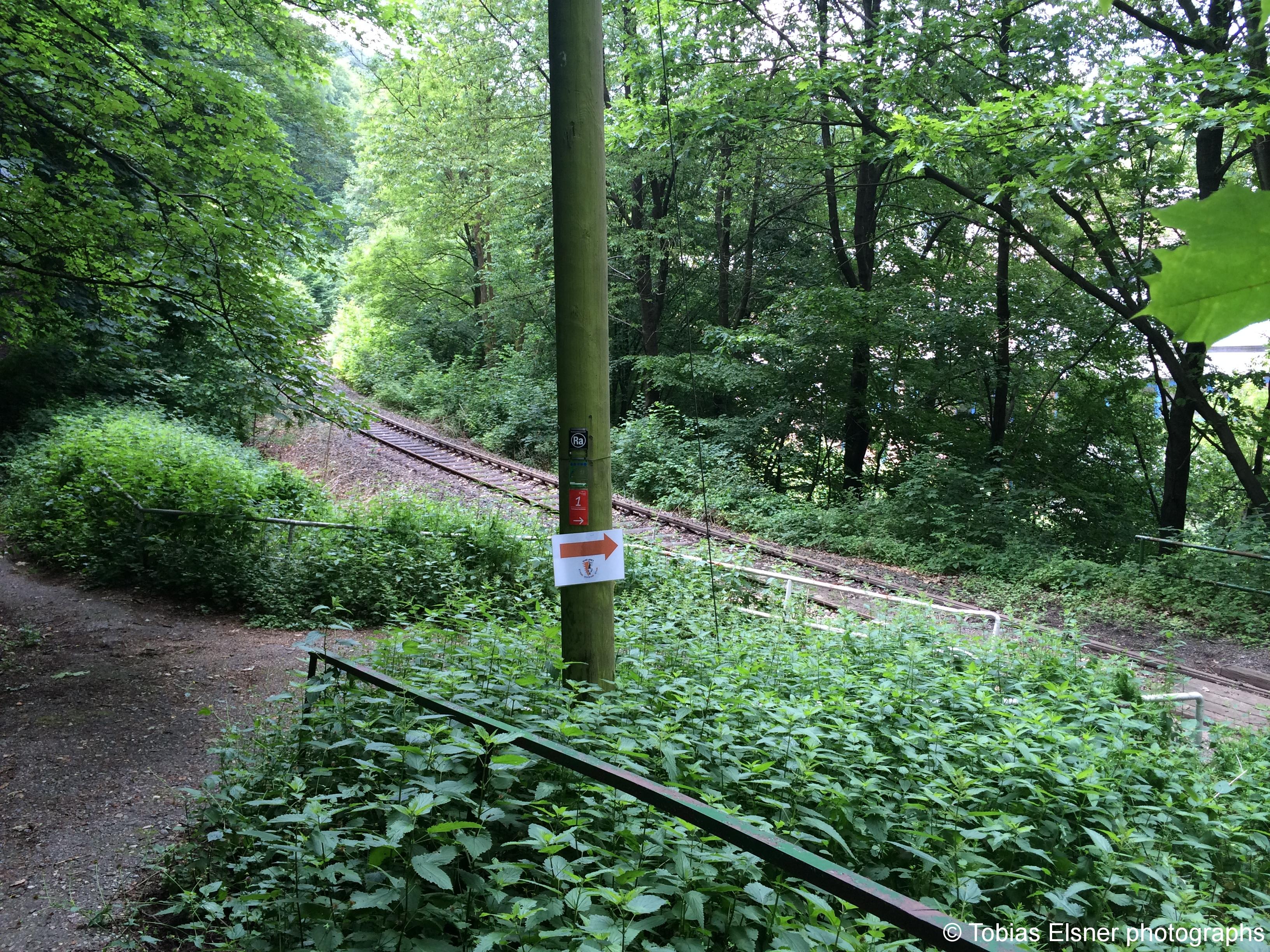 Wanderung Wald Wasser Wolle Weg Radevormwald 2014 Nr.48