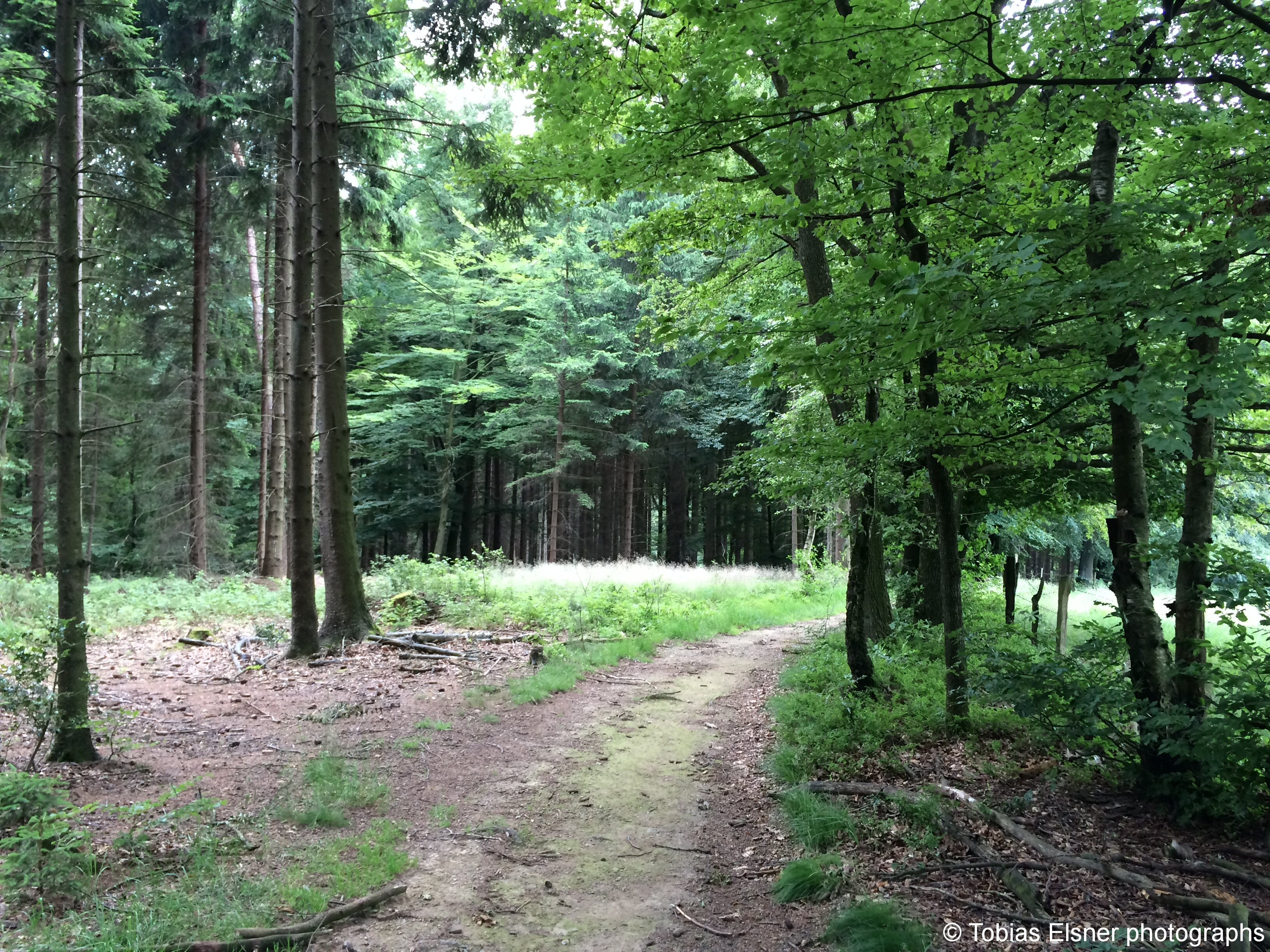 Wanderung Wald Wasser Wolle Weg Radevormwald 2014 Nr.95