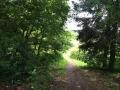 Wanderung Wald Wasser Wolle Weg Radevormwald 2014 Nr.04