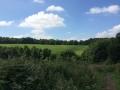 Wanderung Wald Wasser Wolle Weg Radevormwald 2014 Nr.05