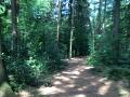 Wanderung Wald Wasser Wolle Weg Radevormwald 2014 Nr.08