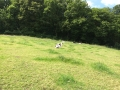 Wanderung Wald Wasser Wolle Weg Radevormwald 2014 Nr.27