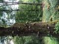Wanderung Wald Wasser Wolle Weg Radevormwald 2014 Nr.33