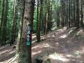 Wanderung Wald Wasser Wolle Weg Radevormwald 2014 Nr.35