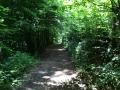Wanderung Wald Wasser Wolle Weg Radevormwald 2014 Nr.68
