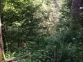Wanderung Wald Wasser Wolle Weg Radevormwald 2014 Nr.69