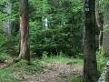 Wanderung Wald Wasser Wolle Weg Radevormwald 2014 Nr.92