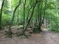 Wanderung Wald Wasser Wolle Weg Radevormwald 2014 Nr.93