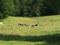 Wanderung Wald Wasser Wolle Weg Radevormwald 2014 Nr.98